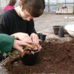 Apprendisti giardinieri